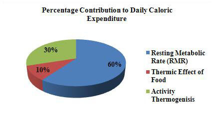 daily caloric expenditure